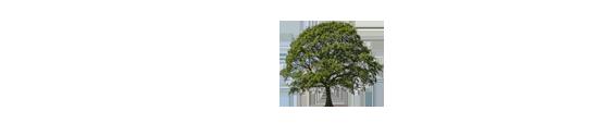 Træpleje Nord logo